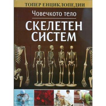 Слика на Скелетен систем