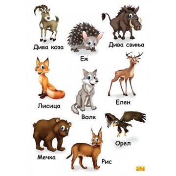 Слика на Диви животни